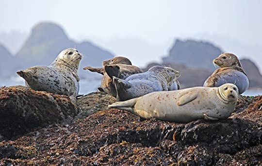 Seals, Resting, Rock, Ocean, Wildlife, Water, Mammal