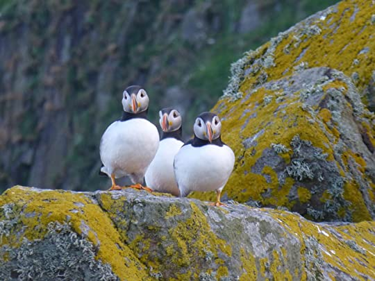 Puffins on the Shiant Islands in the Outer Hebrides