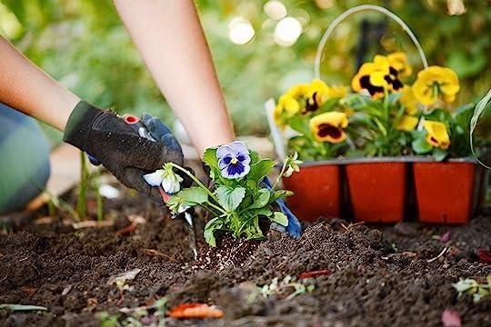 Growing Spring Pansies & Violas | Petitti Garden Centers