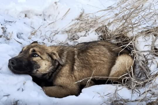 Teens Notice Stray Puppy Shivering In The Snow, Then Realize She's Hurt And Can't Move - ILoveDogsAndPuppies