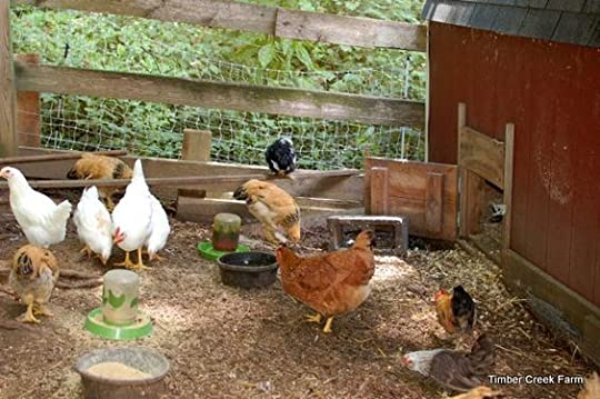 Category: chickens - Timber Creek Farm