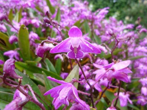 Image: Australian Plants Society NSW