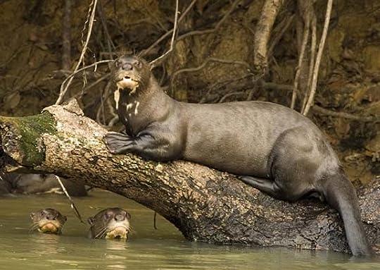 Giant-Otter-Size.jpg