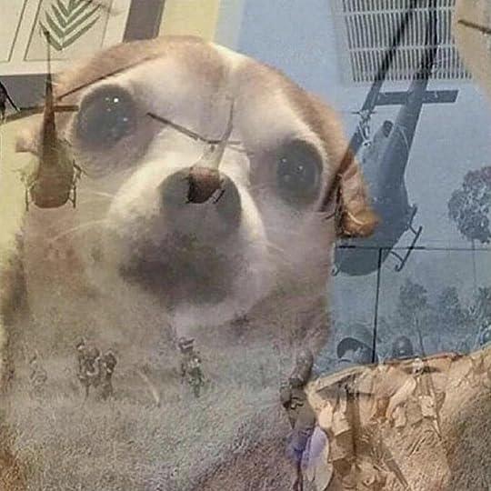 PTSD Chihuahua | Know Your Meme