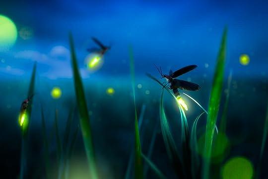 How Fireflies Make Light - Plunkett's Pest Control