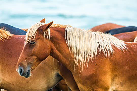 Wild horses of North Carolina's Outer Banks. By Julia Soplop