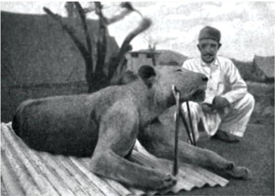 Second-Tsavo-lion