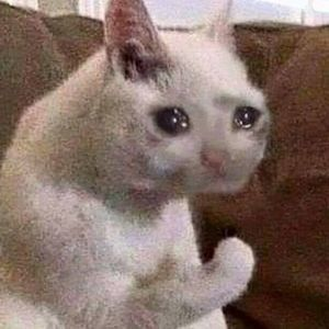 Crying Cat - Meming Wiki