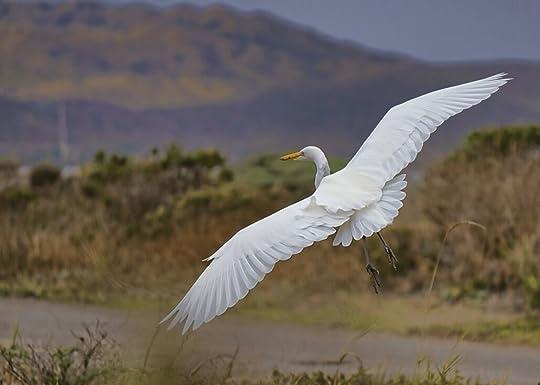 white heron bird taking flight in hilly area
