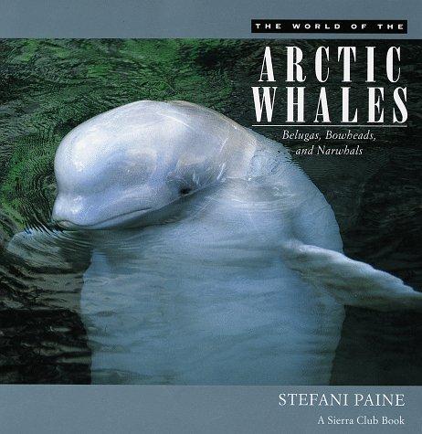 The New Fabric Magic Stefani Paine