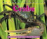 Nature Close-Up - Crabs  by  Elaine Pascoe