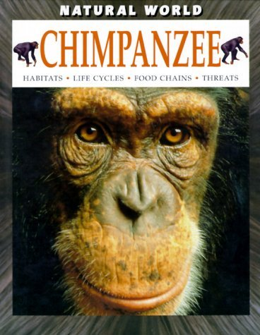 Chimpanzee  by  Martin Banks