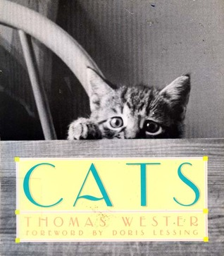 Cats: Thomas Wester  by  Thomas Wester
