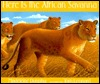 Here Is The African Savanna  by  Madeline Dunphy