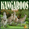 Kangaroos for Kids  by  Judith Logan Lehne