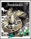 Rattlesnakes Wildlife Education