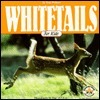 Whitetails for Kids  by  Tom Wolpert