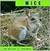 Mice Kevin J. Holmes