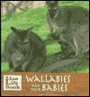Wallabies and Their Babies Marianne Johnston