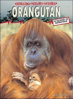 Orangutan  by  David Orme