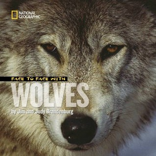 Face to Face With Wolves Jim Brandenburg