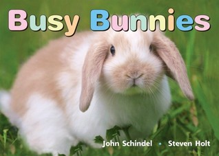 Busy Bunnies  by  John Schindel