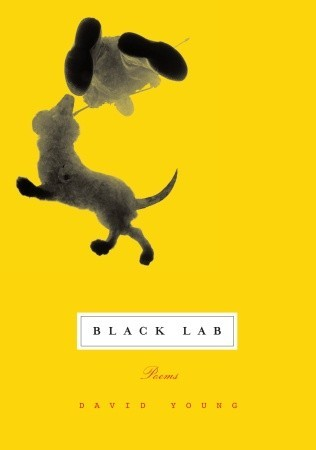 Black Lab  by  David Young