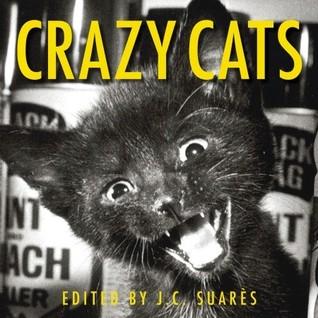 Crazy Cats  by  J.C. Suares