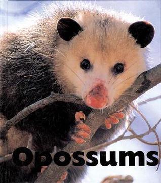 Opossums Sandra      Lee