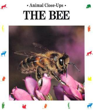The Bee: Friend Of The Flowers Paul Starosta