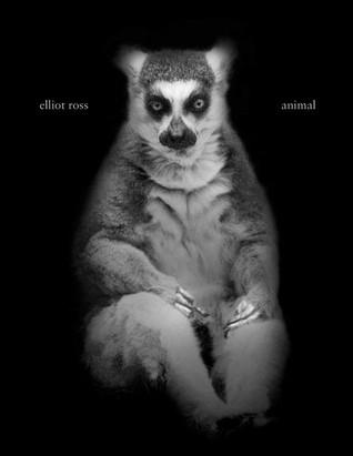 Animal  by  Elliot Ross