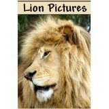 Lion Pictures  by  G. Alexander