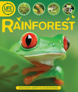 Rainforest  by  Sean Callery