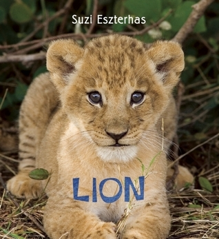 Eye on the Wild: Lion  by  Suzi Eszterhas
