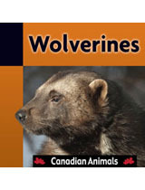 Wolverines (Canadian Animals #5)  by  Sandra McIntyre