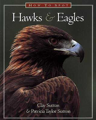 How to Spot Hawks & Eagles Clay Sutton
