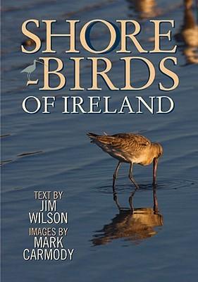 Shorebirds Of Ireland Jim Wilson