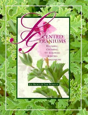 Scented Geraniums  by  Jim Becker