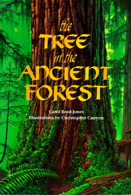 Tree in the Ancient Forest Carol Reed-Jones