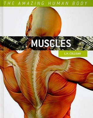 Muscles  by  L.H. Colligan