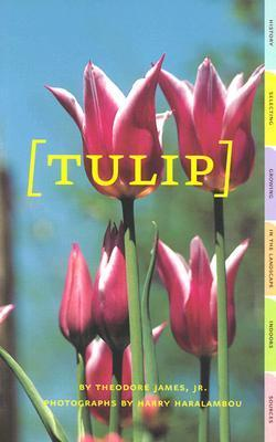 Tulip Theodore James