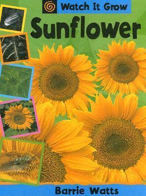 Sunflower  by  Barrie Watts