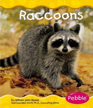 Raccoons  by  William John Ripple