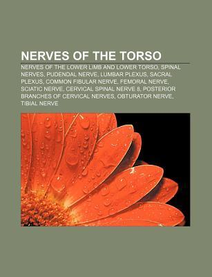 Nerves of the Torso: Nerves of the Lower Limb and Lower Torso, Spinal Nerves, Pudendal Nerve, Lumbar Plexus, Sacral Plexus Source Wikipedia