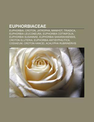 Euphorbiaceae: Euphorbia, Croton, Jatropha, Manihot, Triadica, Euphorbia Leuconeura, Euphorbia Cotinifolia, Euphorbia Susannae Source Wikipedia