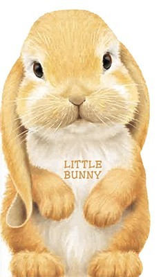 Little Bunny  by  Giovanni Caviezel
