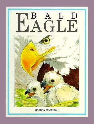 Bald Eagle Gordon Morrison