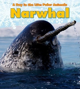 Narwhal  by  Katie Marsico