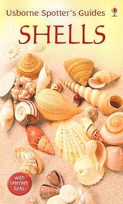 Shells Graham Saunders