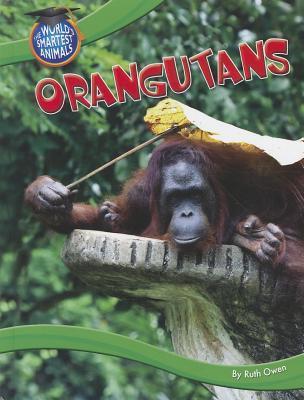 Orangutans  by  Ruth Owen